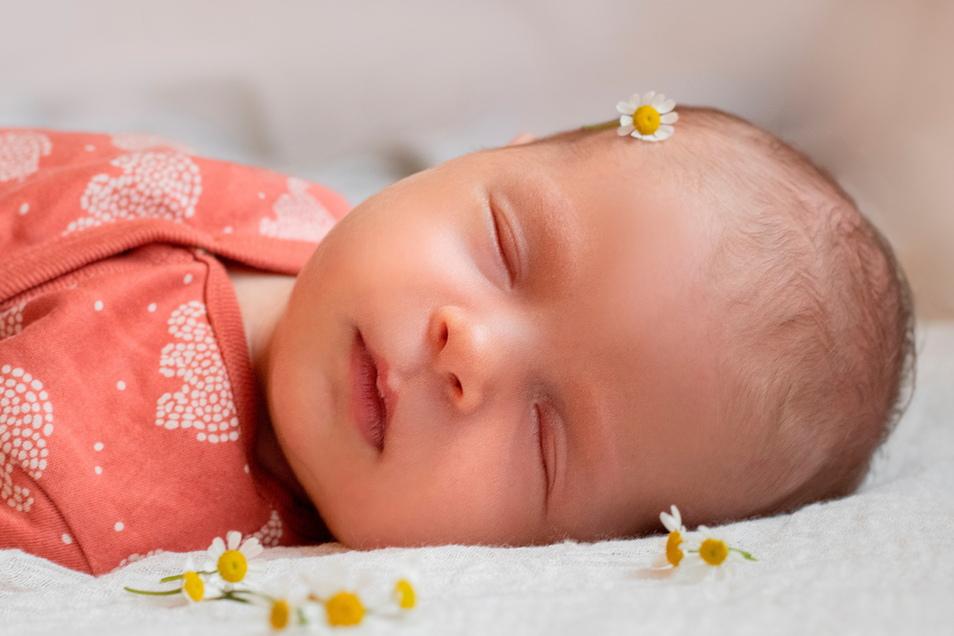 Charlotte, geboren am 10. Februar, Geburtsort: Dresden, Gewicht: 3.060 Gramm, Größe: 49 Zentimeter, Eltern: Belinda und Ronny Lang, Wohnort: Radeberg