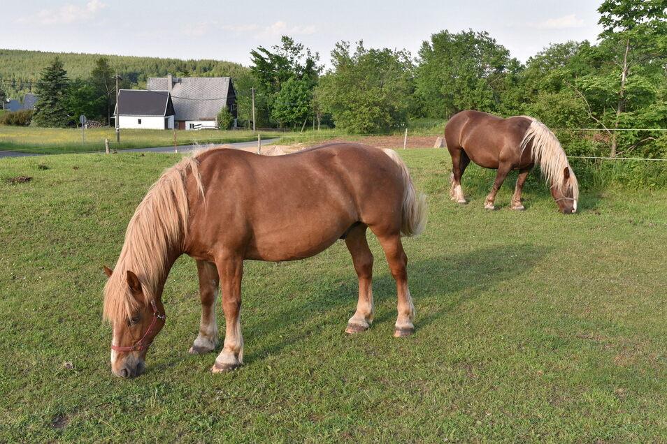 Landidylle in Zinnwald. Doch die Zeiten, als die Pferde nur auf der Weide stehen durften, sind dank gesunkener Coronazahlen jetzt wieder vorbei.