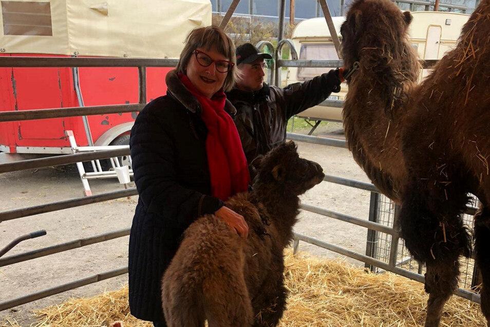 Nach der Geburt war das Kamelfohlen für ein paar Tage zurück zum Zirkus ins Zelt gezogen. Antje Herrmann hat es besucht.
