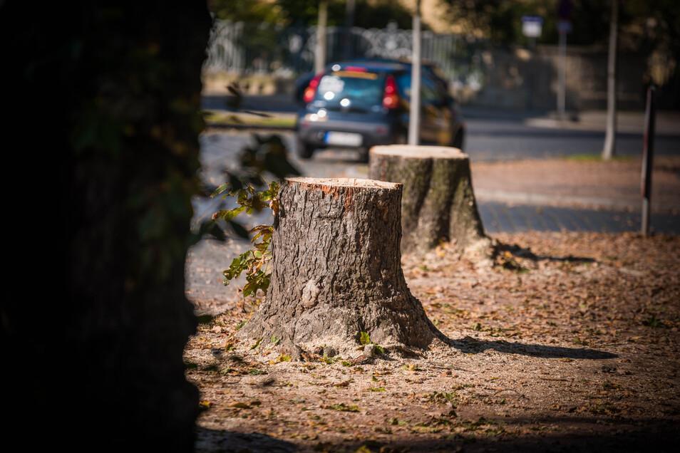Nach Willen des Umweltministeriums soll das Bäumefällen in Zukunft erschwert werden.