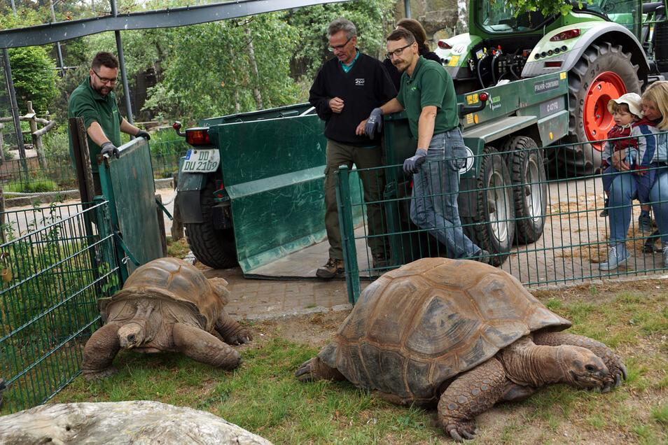 Per Anhänger ging es für die Schildkröten ins Freigehege.