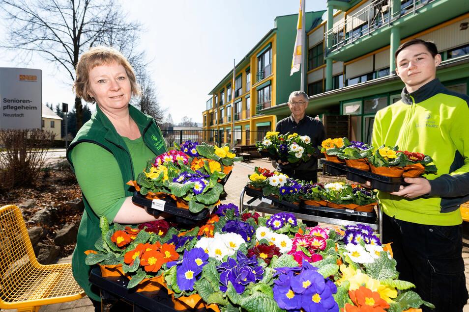Antje und Lennart May von der Gärtnerei Gruschwitz übergeben 200 Primeln an das ASB-Seniorenpflegeheim Neustadt, weil die Blumen nicht mehr verkauft werden können. In der Mitte steht Heimleiter Christian Kowalow mit Abstand wegen der Corona-Pandemie.