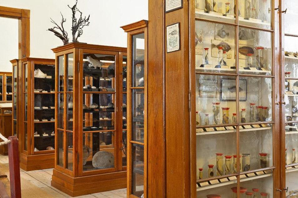 Blick in die Wunderkammer des Naturalienkabinetts, das in seiner ursprünglichen Form erhalten ist; eine Seltenheit.