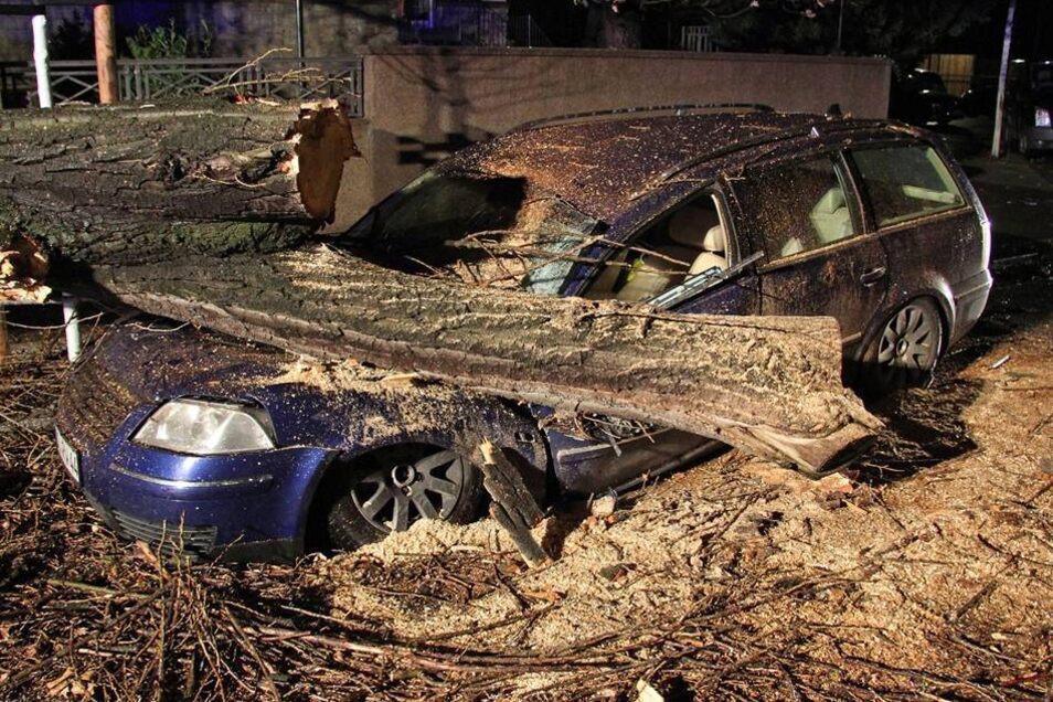 Am Donnerstag ließ der Sturm gegen 23.30 Uhr einen Baum auf der Kronenstraße umkippen. Die Pappel fiel genau auf einen geparkten VW Passat. Der Wagen wurde unter der Last des Baumes zerdrückt.