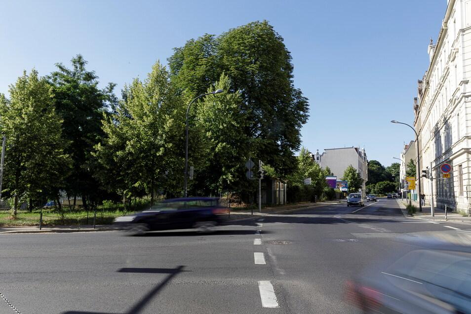 Auf der Grünfläche an der Ecke Cottbuser Straße/Rauschwalder Straße gibt es einen Hundeauslaufplatz. Ab Mai ist er nutzbar.
