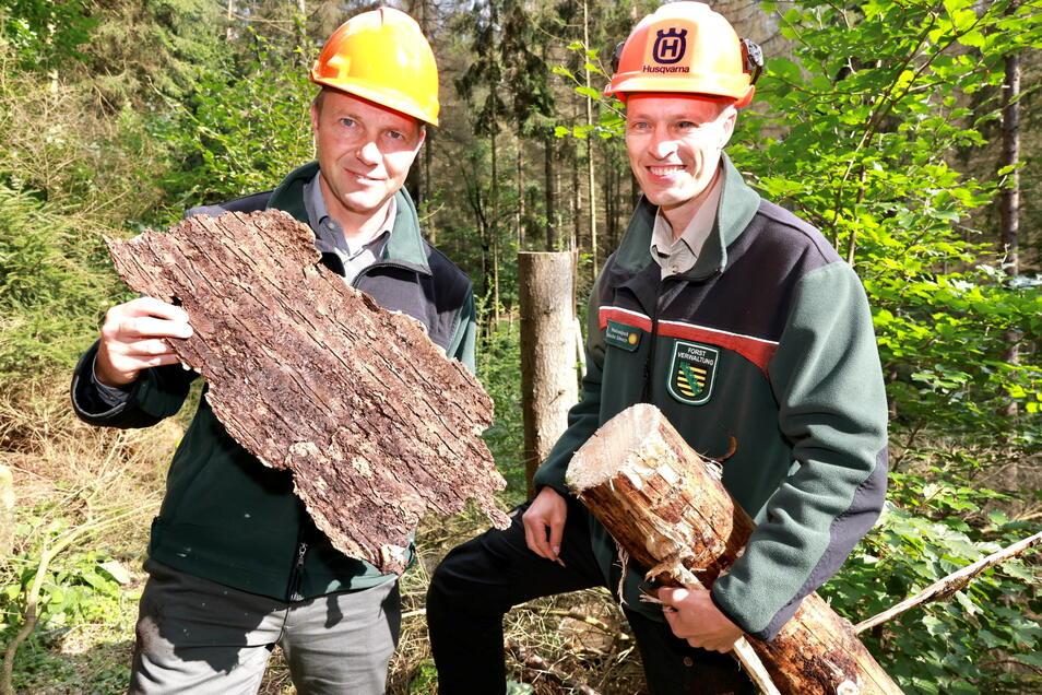 Sachsens Umweltminister Wolfram Günther (Grüne, li.) mit Nationalparkchef Ulf Zimmermann beim Ortstermin zum Freischneiden der Wege am 24. August.
