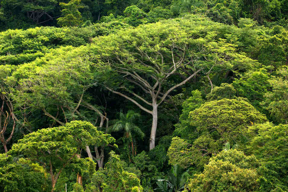 Vom Artensterben sind laut WWF vor allem die Tropen und der Amazons-Regenwald betroffen.