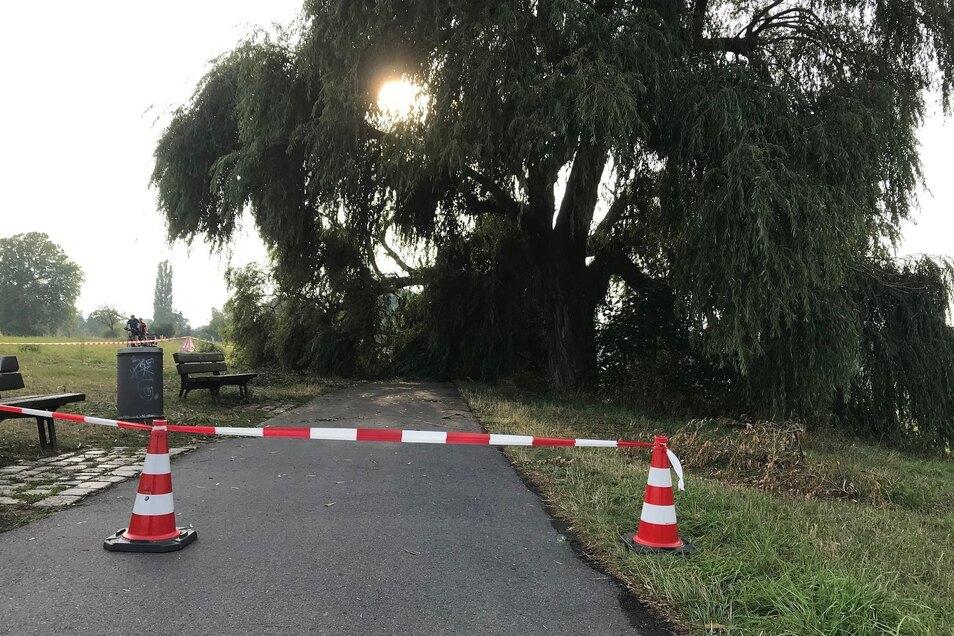 Der Elberadweg ist nahe der Waldschlößchenbrücke gesperrt, weil der dicke Ast einen Baumes auf den Weg gefallen ist.