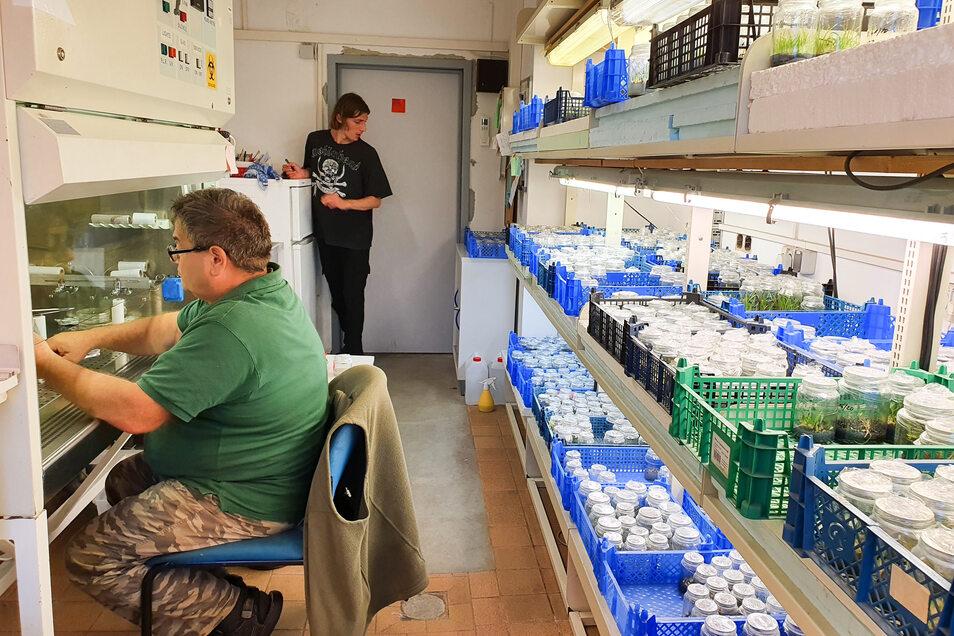 Ein Blick ins Labor von Steffen Keller. In den Regalen stehen viele Kisten Orchideen, die fünf bis sechs Mal in neue Nährböden umgesetzt werden.
