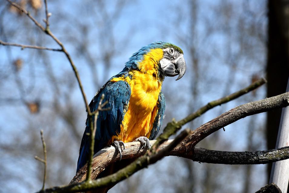 Papageien-Dame Lora aus dem Zittauer Tierpark ist jetzt das Maskottchen des Freundeskreises für die Kulturhauptstadt.