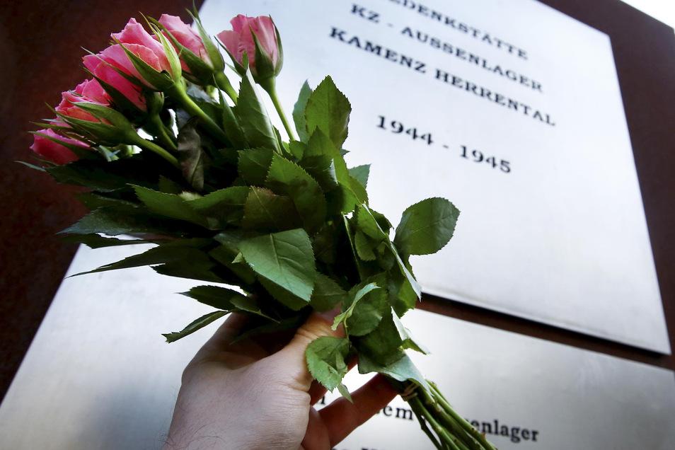 Weil keine Gedenkveranstaltungen am 8. Mai an den Ehrenmalen möglich sind, ruft der Förderverein Gedenkstätte KZ-Außenlager Kamenz-Herrental dazu auf, einfach Blumen an den Kamenzer Ehrenmalen niederzulegen.