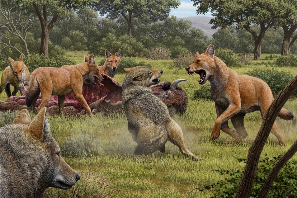 Die Illustration zeigt ein Rudel Canis dirus, die ihre Bisonbeute fressen, während sich zwei graue Wölfe (Canis lupus) nähern. Die Tiere waren wohl nur sehr entfernte Cousins, wie Erbgutanalysen ergaben.