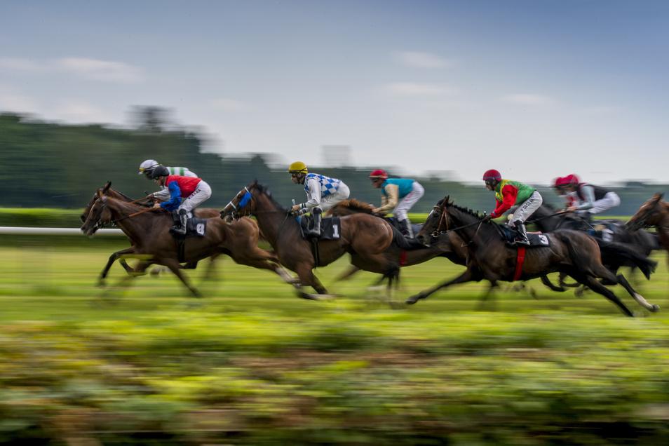 Schnelle Pferde in schnellen Transportern zu Rennen zu fahren, ist der Job des Angeklagten. Allerdings hat er seit drei Jahren gar keinen Führerschein mehr.