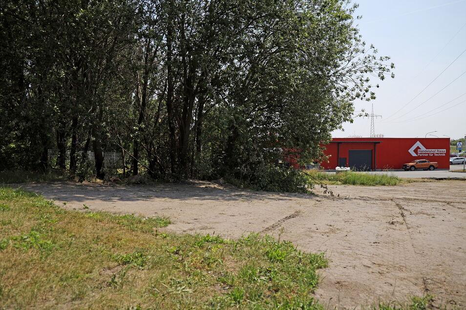 In diesem kleinen Wäldchen in Riesa-Weida hat es am Dienstag gebrannt. Mitarbeiter des Handelshofs (r.) halfen beim Löschen.