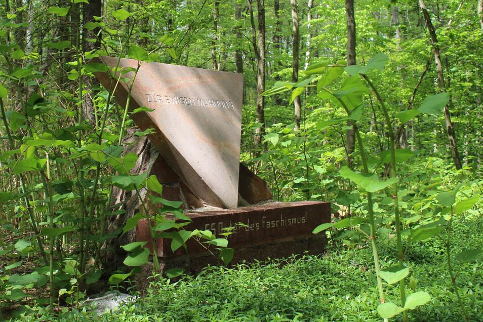 Etwas zugewuchert steht der Gedenkstein im Glaubitzer Wald, in der Nähe des Birkenteichs. Er erinnert an einen Todesmarsch, der mehrere Tage in Glaubitz Station machte.
