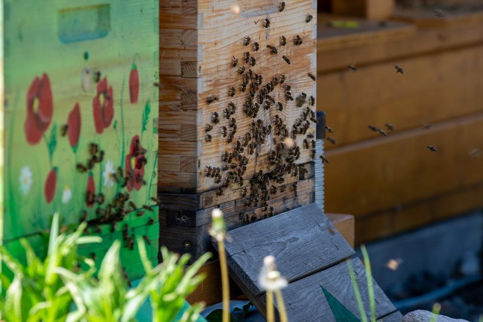 Bienen brauchen trockenes Wetter mit Temperaturen ab 15 Grad aufwärts und wenig Wind, um auf Sammeltour zu gehen.