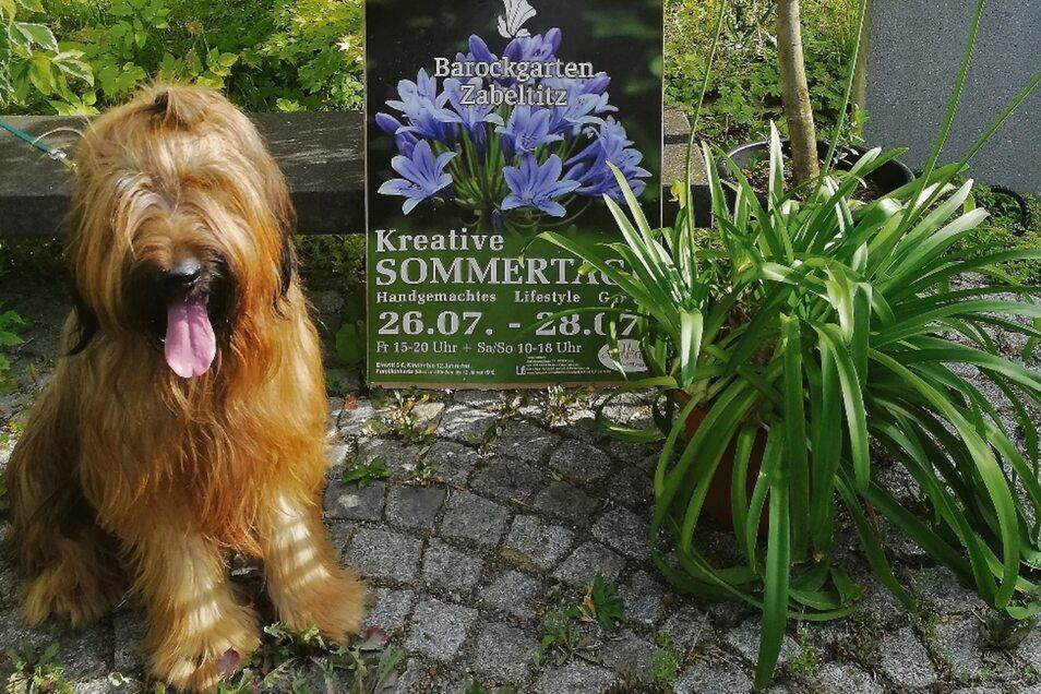 Briard Artur ist nicht nur Erika Koopmann Liebling, sondern auch der heimliche Star der Zabeltitzer Gartentage. Und natürlich kommt er am Wochenende mit.