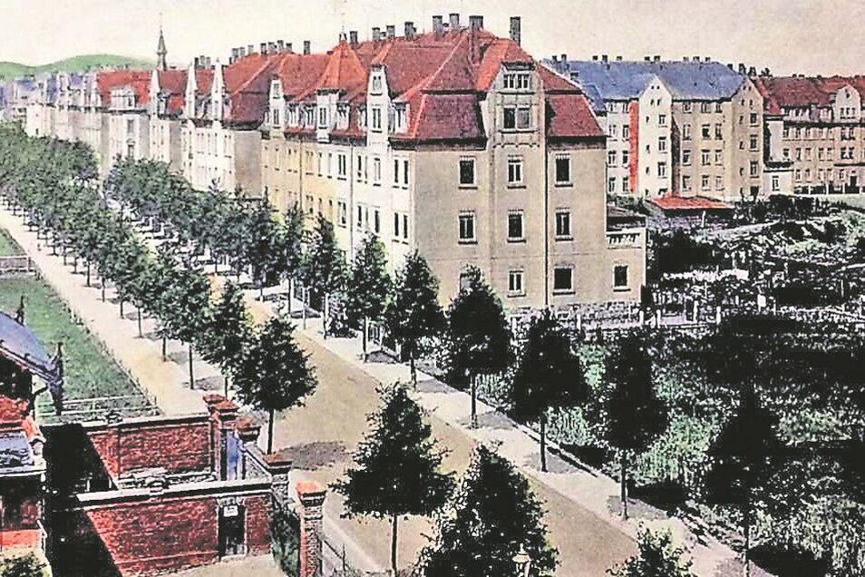 Diese historische Ansichtskarte zeigt noch etliche Lücken in der Löbauer Neustadt auf, hier ein Blick auf die heutige Breitscheidstraße.