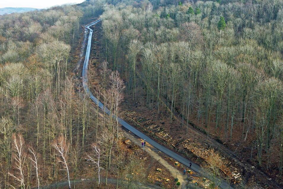 Nach dem Kahlschlag am Löbauer Berg wünschen sich Einwohner hier wieder mehr Bäume.