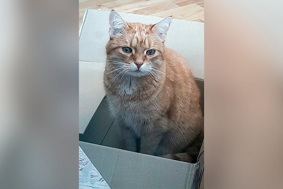 Garfield stromert gerne durch die Hinterhöfe in der Bautzener Schliebenstraße. Nun wird er vermisst.