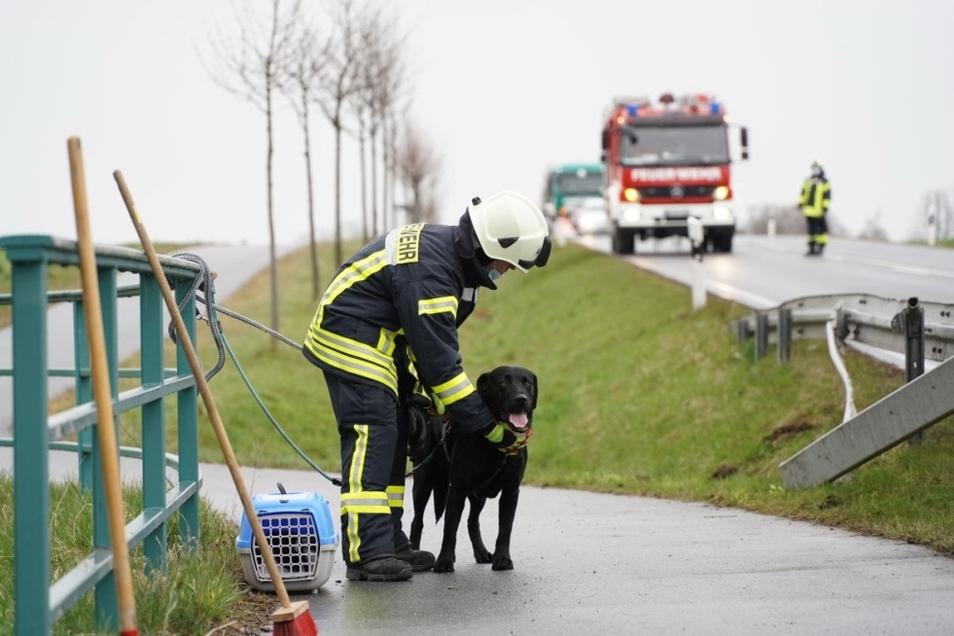 Im Unfallfahrzeug befanden sich auch ein Hund und eine Katze. Die Tiere wurden von Feuerwehrleuten betreut.