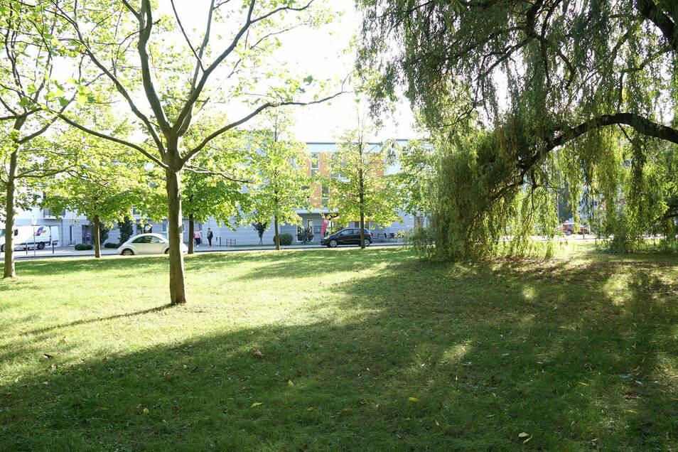 Diese Grünfläche an der Alleestraße will die Stadt aufwerten. Rund um die Trauerweide rechts soll beispielsweise eine Krokuswiese angelegt werden.