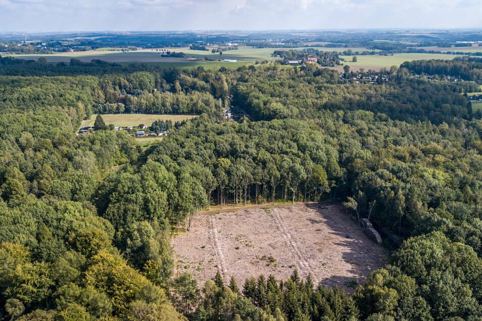 """Mitten im Wald an der Fröhne ist ein """"Loch"""" entstanden. Die Bäume mussten gefällt werden, weil sie vom Borkenkäfer befallen waren."""