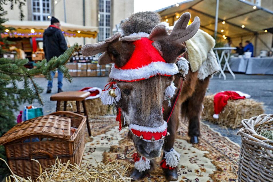 """Nun gut, wirklich glücklich sieht dieses """"Rentier"""" auf dem Seifhennersdorfer Weihnachtsmarkt nicht aus."""