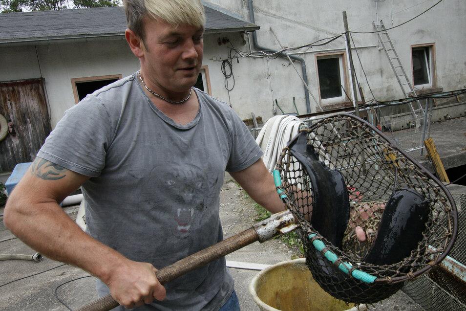 Matthias Schnek hat einen Wels im Kescher. Verschiedene lebende und küchenfertige Fische gibt es am Wochenende beim Fischerfest zu kaufen. Und natürlich auch die üblichen Delikatessen für Fisch-Liebhaber.