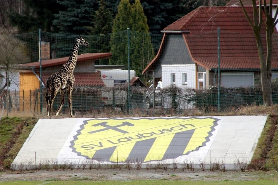 """Scherz zum 1. April - Maskottchen Giraffe """"Gerda"""""""