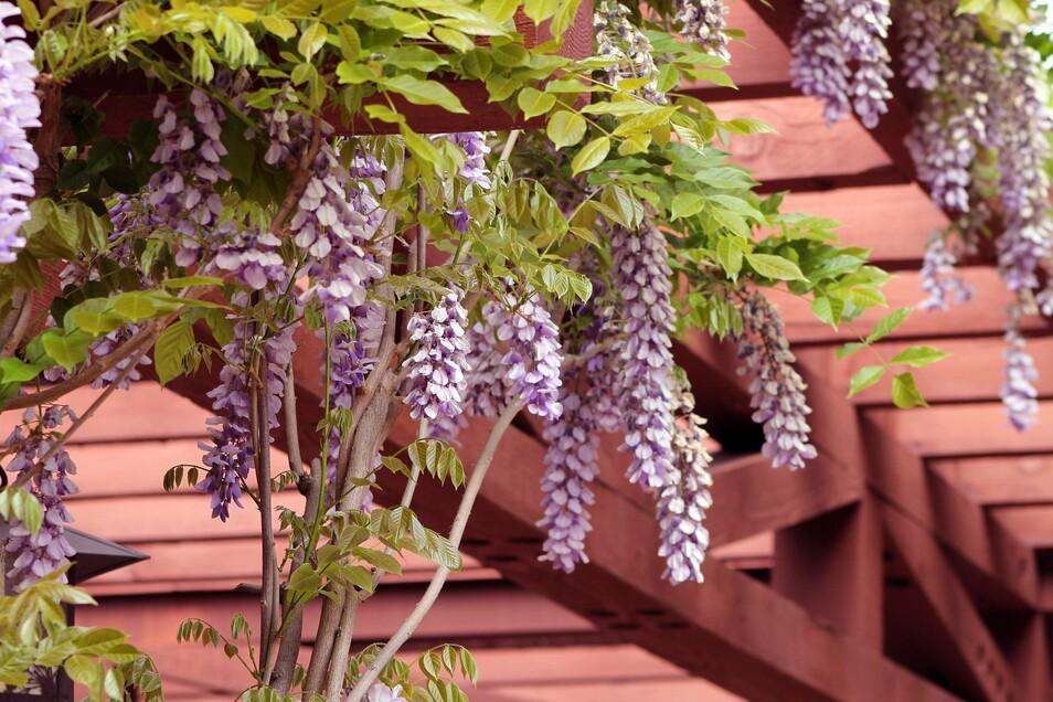 Der Trick bei einem Cottage-Garten: Der gut geplante Garten wirkt so, als wäre er nie geplant worden.