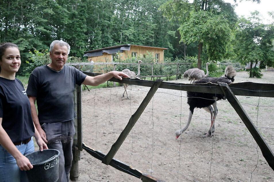 Wilfried Gabel (69) und Enkelin Kim-Laura füttern Straußenhahn Gustav und Henne Locke. Strauße sind keine Einzelgänger, sondern typische Herden- und Weidetiere.