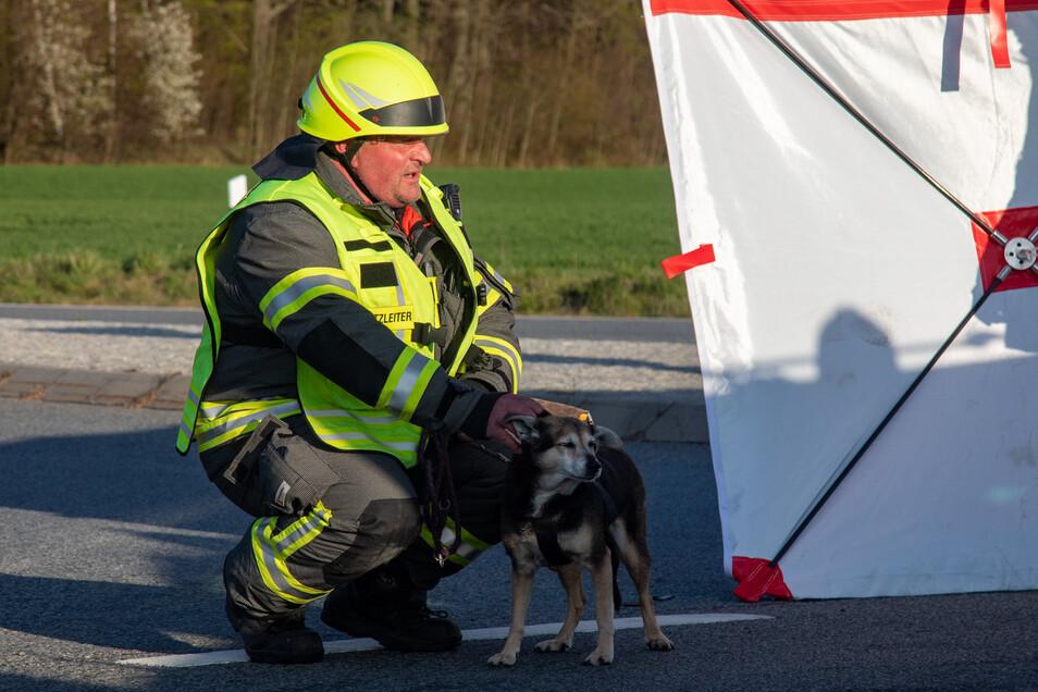 Kameraden der Burkauer Feuerwehr kümmerten sich um einen Hund aus einem der beiden am Unfall beteiligten Autos.