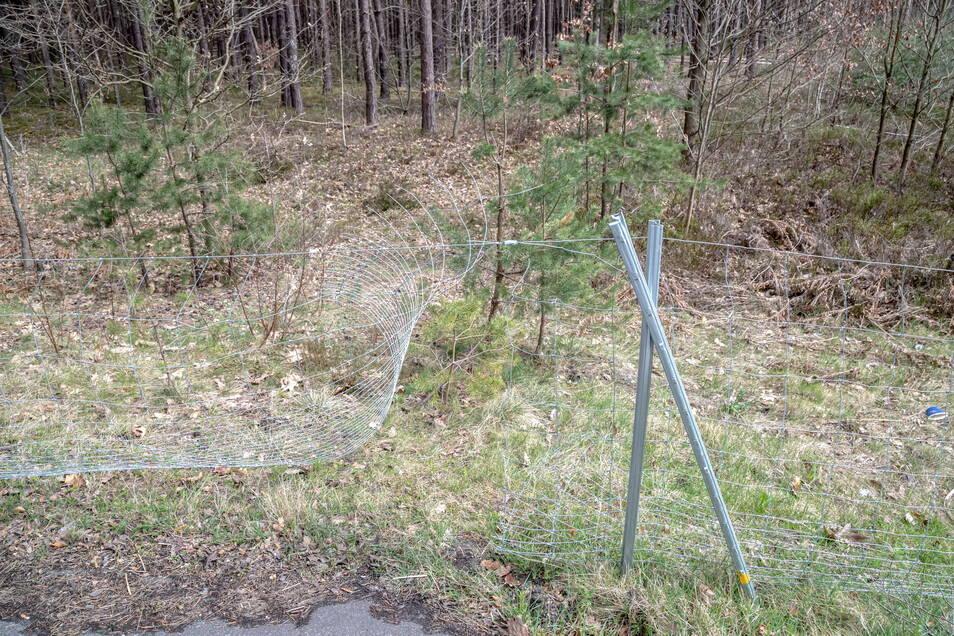 Keine Zerstörung, sondern fehlende Befestigungen sind die Ursache für die Lücken im Wildschweinzaun entlang der B 115 zwischen Sandschenke und Stannewisch.