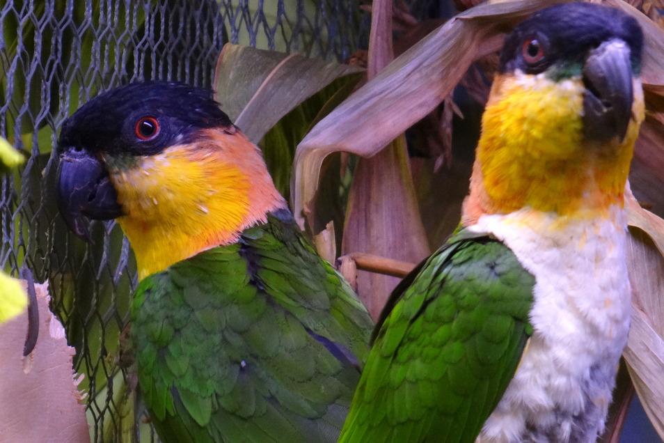 In Wilsdruff gibt es am kommenden Wochenende einiges zu entdecken. Die Ziergeflügel- und Exotenzüchter laden dazu ein.