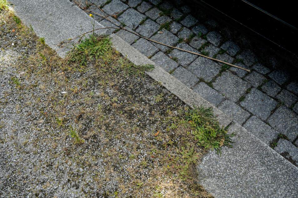 Überall dort, wo die Bordsteine an der Paulistraße schmaler sind, habe mal ein Baum gestanden, sagt Olaf Haase.
