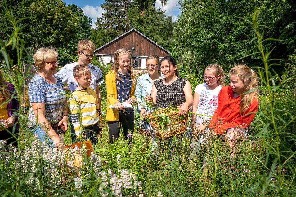 Kräuterfachfrau Cornelia Römer aus Chemnitz erklärt den Jungen Naturwächtern im Natur- und Freizeitzentrum, welche Kräuter es gibt und wie sie verwendet werden.