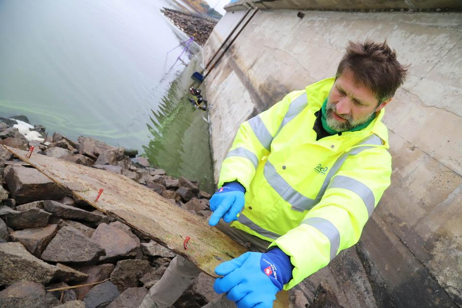 Die Staumauer der Talsperre Quitzdorf wurde für Voruntersuchungen schon einmal unter die Lupe genommen. Dazu musste der Pegel des Gewässers beträchtlich abgesenkt werden.