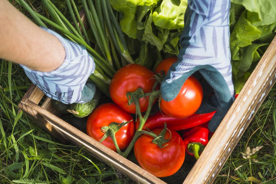 Welcher Garten passt am besten zu den eigenen Bedürfnissen? Diese Frage gilt es vorab zu klären.