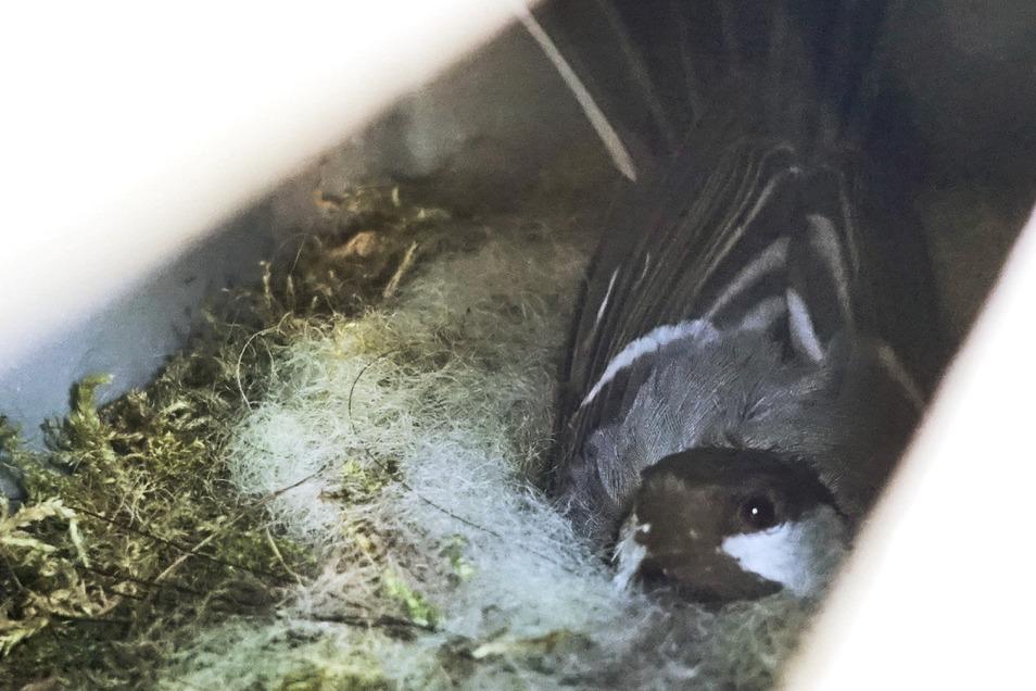 Durch den Schlitz unter dem Spätschalter der Esso-Tankstelle ist der Vogel kaum zu erkennen, geschweige denn, zu fotografieren.