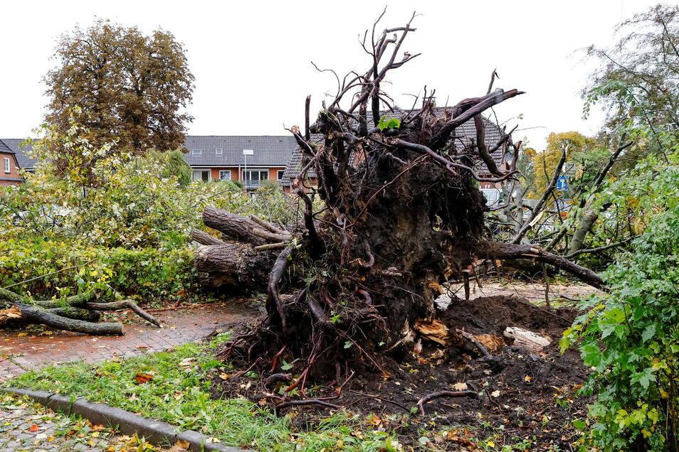 Ein Tornado hat eine 100 Meter breite Schneise der Verwüstung nahe Kiel hinterlassen.