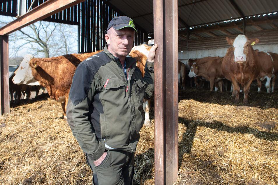 Landwirt Matthias Hennig ist verärgert. Bereits zum dritten Mal wurde ein Kalb aus seine Herde gerissen. Er fordert Konsequenzen.