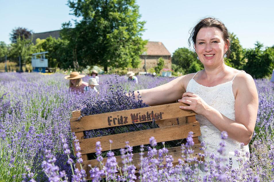 Lavendel, so weit das Auge reicht: Christine Winkler-Dudczig erntet mit Helfern gerade die duftende Pflanze auf ihrem Feld in Königshain-Wiederau, nahe Mittweida.