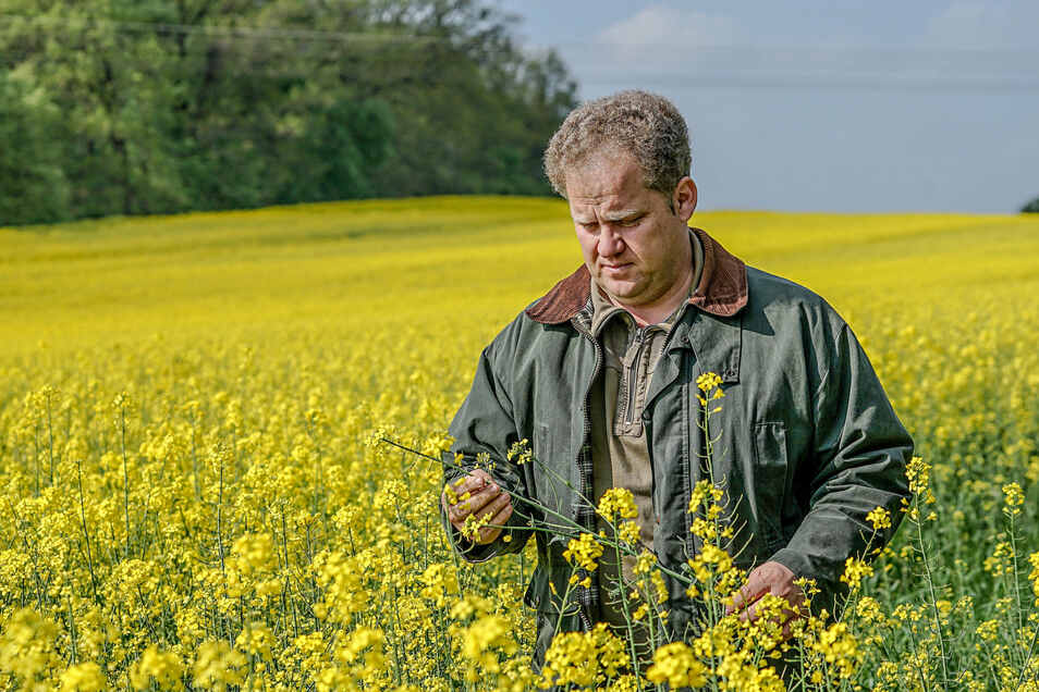 Stefan Triebs steht bei Bautzen in einem Rapsfeld der von ihm geleiteten Saritscher Agrar Gesellschaft. Die Ölfrucht bräuchte jetzt dringend Regen – und nicht nur sie.