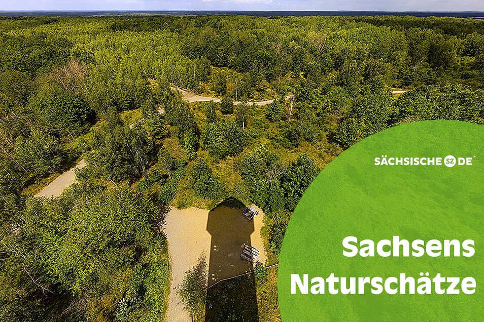 156 Stufen führen hinauf zur Aussichtsplattform des Haselbergturms, der hier seinen Schatten auf die Wildnis der Königsbrücker Heide wirft.