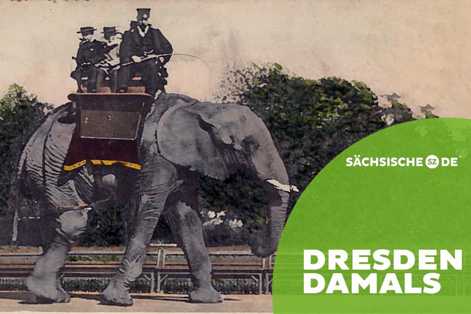 Eine Attraktion für die Besucher des Dresdner Zoos um 1900 war der Ritt auf einem Elefanten.