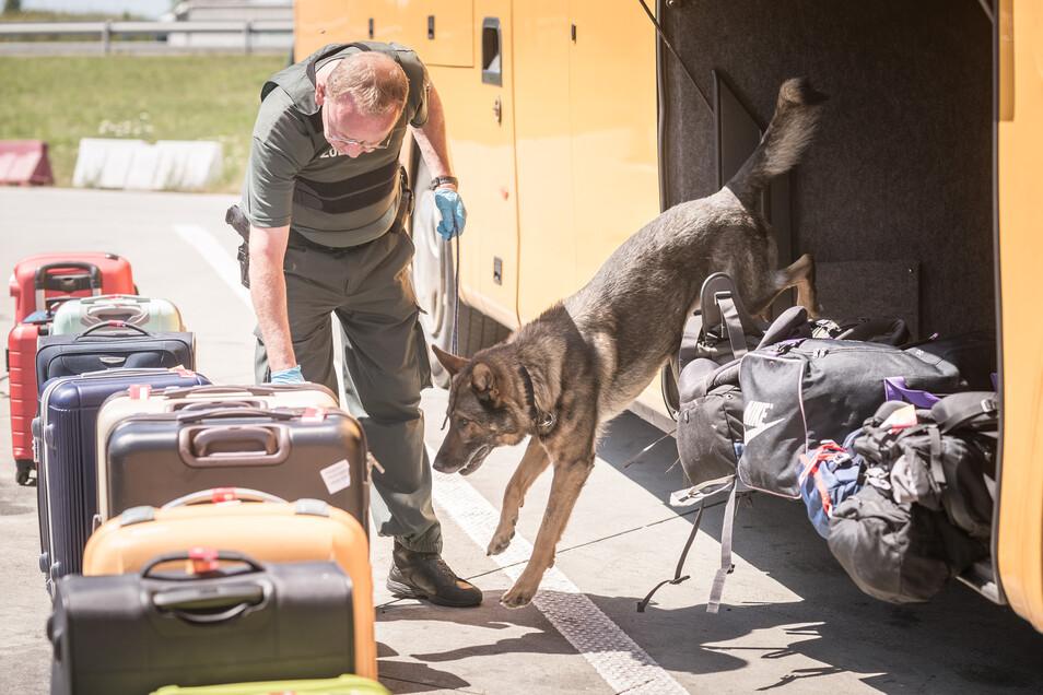 Mit speziell ausgebildeten Hunden durchsuchen Beamte in Grenznähe die Koffer und Taschen von Reisenden. Nicht selten wird dabei Rauschgift gefunden.