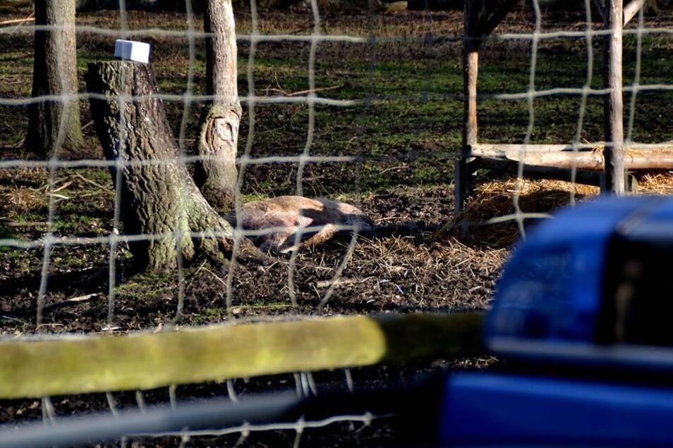 Anschließend haben die Unbekannten das Tier erschossen und offenbar mit einer Axt geköpft.