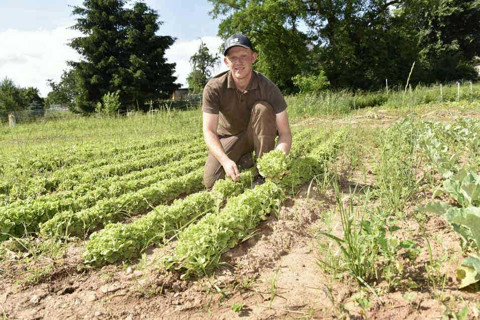 Landwirt Steve Adam vom Kastanienhof Adam auf dem Salatfeld.