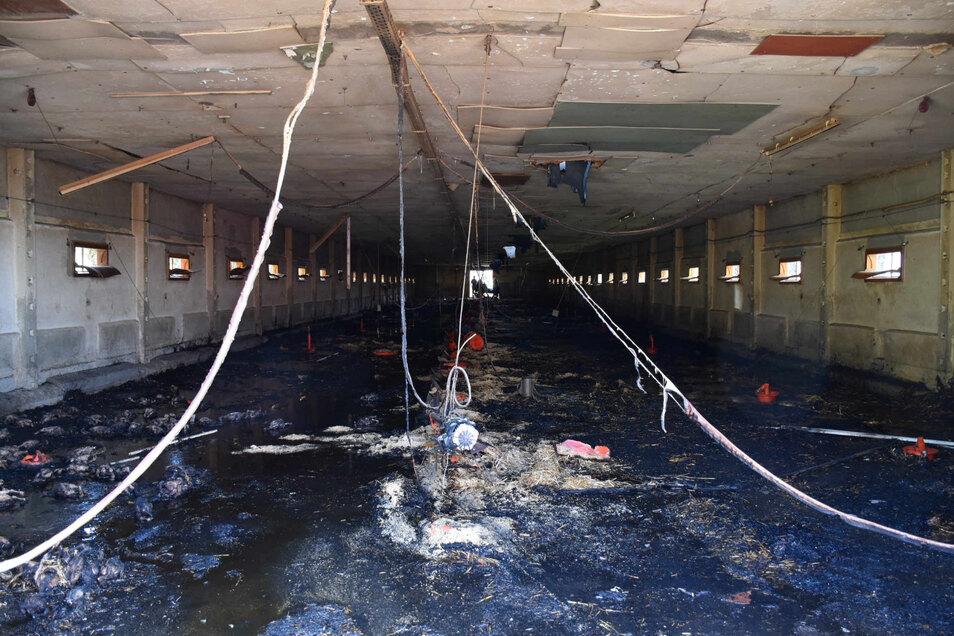 So sieht die Halle nach dem Brand aus.